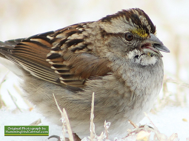 A Sparrow deals with life during a brutal, cold winter day