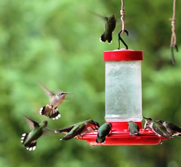 feeder hanging feeders watch recipe hooks with youtube hqdefault hummingbird