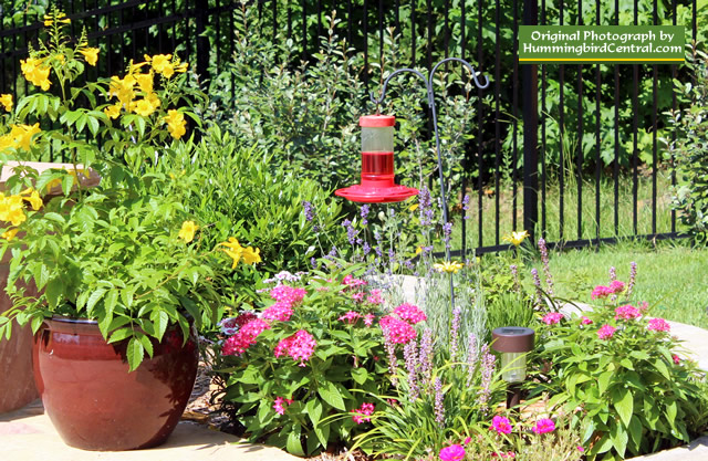 How to attract hummingbirds to your  landscape: hummingbird gardening!