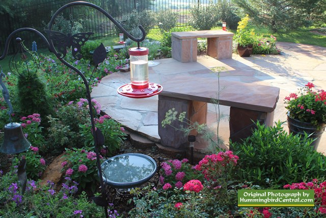 How To Attract Hummingbirds To Your Texas Landscape: Hummingbird Gardening!
