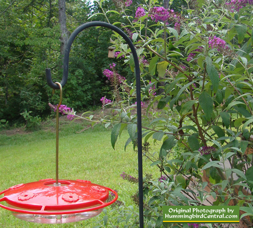 Hummingbird Garden Plants Hummingbird Garden Plans