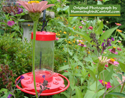 How to attract hummingbirds with flower gardening water