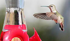 How to pick the right hummingbird feeder for your yard