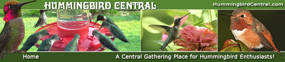A Gathering Place For Hummingbird Enthusiasts!