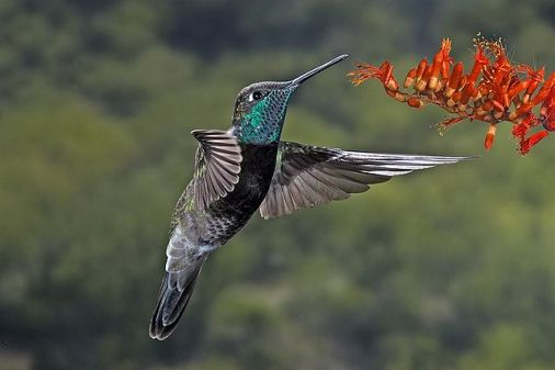 Hummingbird Frequently Asked Questions
