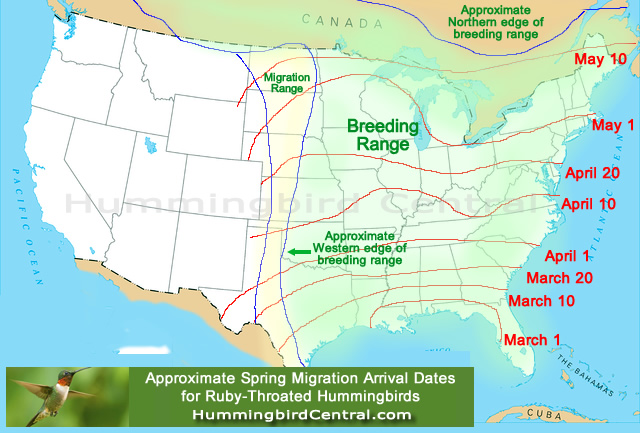Map showing the approximate spring migration arrival dates for Ruby-Throated Hummingbirds in North America